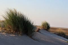 (isabelle bugeaud) Tags: dune sable végétation grauduroi nature sauvage ombre