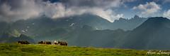 Hautacam (arnolamez) Tags: pyrenees landscape paysage mountain montagne hautespyrenees hautacam