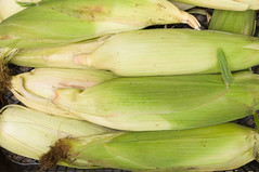 Fresh corn on cobs (svetoslavradkov) Tags: corn fresh agriculture harvest sweet yellow sweetcorn vegetable background closeup color farm food golden grain green healthy nature organic plant raw summer husk pile bio cook cooking crop ears eat farming group hair heap horizontal image ingredient leaf natural photo planks products ripe rustic silky table uncooked vegetarian wooden field