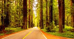 Avenue Of The Giants (jeandelalune) Tags: redwoods avenue giants humboldt california
