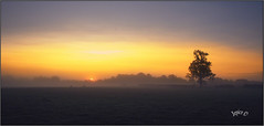 Sunrise Collection. Part 24.. (Picture post.) Tags: landscape nature green sunrise trees fields shadows sheep paysage arbre mist brume sunburst summertime