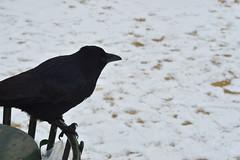 DSC_0525 (Ivan Viana) Tags: nieve snow day día francia france