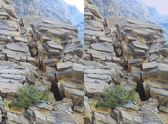 Looking Upwards (ubernatural) Tags: mtrobson berglake camping backpacking hiking bc canada stphmkre stereophotomaker crossviewstereo 3d mountain