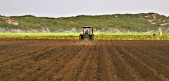 June21Image2391 (Michael T. Morales) Tags: agriculture farm cultivation rows furrows soil harvest salinasvalley ag