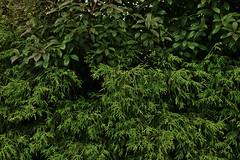 20180623_SDIM4088 (NAMARA EXPRESS) Tags: street plant summer cloudy evening outdoor color toyonaka osaka japan spp spp653 foveon x3 sigma dp2 namaraexp