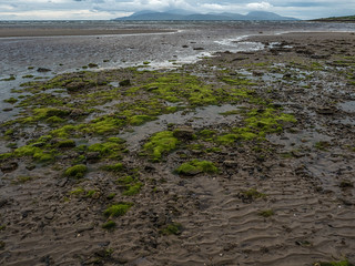 Greens on the Beach - Ostel Bay July 2018