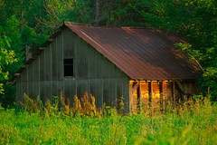 IMG_5165 (keithmorrisphoto) Tags: building rusted old abandoned woods trees barn field morning green