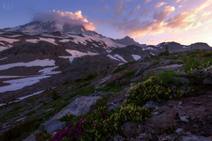 Rugged Beauty (Christina Angquico) Tags: mtrainier mazama ridge wildfowers pacificnorthwest pnw northwest mountain sunrise nikon d600 1635mm christinaangquico