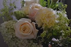 DSC_0080 (sxcxxhx) Tags: japan osaka kyoto hydrangea flower trip voyage 日本 大阪 京都 旅行