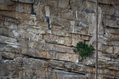 cave paintings on rock wall (Encyclia83) Tags: chiapas mexico sinkhole painting drawing
