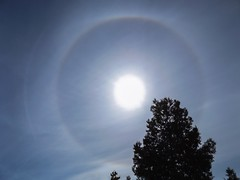 Solar halo (Daniel Boca) Tags: sky blue bluesky sunlight sun tree outdoor outside outdoors nature naturephotography weather meteorology clouds cloud light solar solarhalo