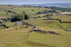 Bucolic England (paul indigo) Tags: paulindigo yorkshire barn bucolic drystonewall field hills landscape pastoral