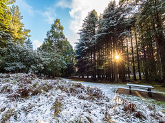 Let there be light! (Joel Bramley) Tags: snow landscape nature winter morning sunday light trees park picnic australia victoria macedon mountain