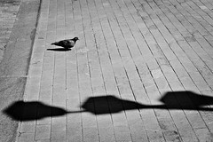(nVa17) Tags: dove bird shadows minimalism minimal july july2018 summer perm пермь street streetphoto streetphotography streetphotographers streetphotoperm streettoday photostreet igstreet blackwhite blackandwhite blackandwhitephotography bnw bw чб lensculture lensculturestreets wearethestreet everydayrussia russia everybodystreets