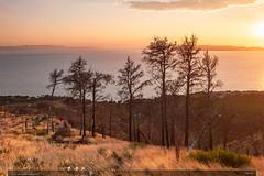 Večer (jirka.zapalka) Tags: croatia landscape podgora summer evening trees pines afterfire