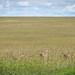 Suchbild - Fast Five - Masai Mara