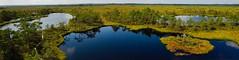 Estonia #nature #bog (ntii24) Tags: nature bog