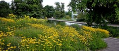 GERMANY, Stuttgart, Höhenpark Killesberg, 76490/10507 (roba66) Tags: germany deutschland reisen travel explore voyages roba66 badenwürttemberg landschaft landscape paisaje nature natur naturalezza stuttgart killesberg blumen blüten fleur flori flor flora flores bloem plants pflanzen colores color colour coleur park garten garden jardin giardini