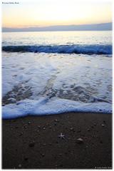 A small starfish / Una piccola stella marina (daril77) Tags: alba sunrise numana marche italy italia ancona acqua water sea mare canon eos7d eos 7d conero marcelli animali animals