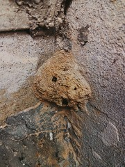Anybody Home? (Zohaib Usman (1M Thanks)) Tags: ants antshome insects insectsandspecies nest antsnest antinfestation zohaibusmanphotography poshe550