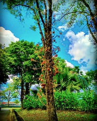 Biawak Industrial Estate, 93450 Kuching, Sarawak https://goo.gl/maps/zXBGsW4rxuy #vakantie #reizen #voyage #viaggio #viaje #resa #Semester #Fiesta #Vacanza #Vacances #Reise #Urlaub #bomen #albero #Baum #Baum #árbol #Asia #Malaysia #Kuching #Sarawak #trave (soonlung81) Tags: trip วันหยุด ต้นไม้ trees vacanza путешествие malaysia 휴일 vakantie resa 馬來西亞 旅行 kuching nature 馬來西亞旅行 reise semester 나무들 asia bomen 여행 albero voyage sarawak 樹木 reizen деревья 度假 baum traveling urlaub ホリデー الأشجار การเดินทาง праздник holiday pokok 木々 árbol travelmalaysia 亞洲 vacances fiesta viaggio viaje travel