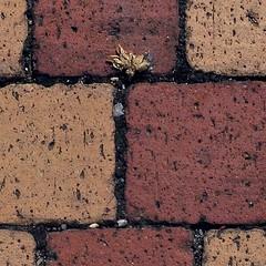 11 - Petite et seule (melina1965) Tags: août august 2018 panasonic lumix dmctz57 bourgogne burgondy saôneetloire montceaulesmines sol sols pavement