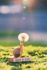 make a wish (auntneecey) Tags: snail makeawish 365the2018edition 3652018 day172365 21jun18 series thehiddenlifeofsnails