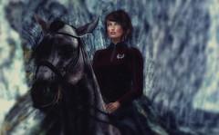 Regal (Carla Putnam) Tags: woman horse riding rider potraitonhorseback onhorse horseback ridinghorse dirtyprincess magika