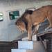 Columbus Zoo-15