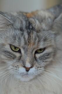 INDOOR -   - internationaler Katzentag