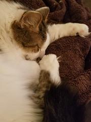 215/365 : Sleepy Bailey