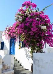 DSC_0120 (JustineChrl) Tags: parikia paros island sunset village landscape beautiful summer holidays greece nikon sky blue white pink flowers house beach