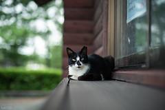 猫 (fumi*23) Tags: ilce7rm3 sony 58mm nokton cosina voigtlander voigtländernokton58mmf14slⅱ manualfocus fmount a7r3 katze gato neko cat chat animal bokeh dof ねこ 猫 コシナ ノクトン フォクトレンダー