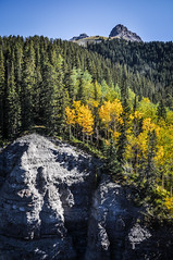 Sneffels Highline Trail, Telluride, Colorado. (Marie-Laure Even) Tags: 2014 america american américain arbre aspen automne autumn color colorado colour couleur etatsunis fall fjall folliage forest forêt hike hiking landscape marielaureeven matin montagne morning mountain nature nikond5000 northernamerica paysage rando randonnée road roadtrip route september septembre sneffelshighlinetrail telluride trail travel tree trek trekking usa unitedstatesofamerica voyage wild wilderness wood yellow гора природа