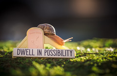 dwell in possibility (auntneecey) Tags: snail dwellinpossibility 365the2018edition 3652018 day176365 25jun18 slide series auntneecey