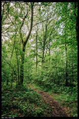 Woodland trail (Falcdragon) Tags: sonya7riialpha ilce7rm2 zeissloxia2821 emount wide liege belgium europe woodland nature loxia2821 carlzeiss