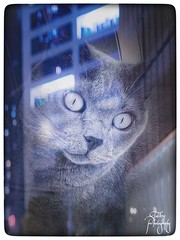 Reflection in the window (tatianalovera) Tags: occhi eyes citta' city riflesso reflection blue blu mirror specchio animale animal window finestra felino gatto cat