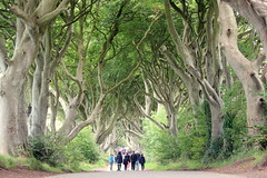 Dark Hedges (Croix-roussien) Tags: ngc darkhedges gameofthrones arbres perspective irlande nature allée