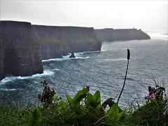Irland (Nadja Golitschek) Tags: irland grüneinsel ireland insel tourismus impressionen cliffsofmoher klippen stein küste felsen natur atlantik wasser wellen himmel wolken stimmung
