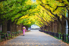 Woman in kimono walking along an avenue lined with ginkgo trees, Tokyo Japan (Patrick Foto ;)) Tags: alone asia attractive autumn back background beautiful beauty branch city fall famous female gaien garden ginkgo girl icho japan japanese jingu kimono kyoto lady leaf leaves life meiji namiki nature november outdoor park people person place plant plants portrait pretty road season shopping sky street style tokyo tourism tree urban vivid walk woman yellow young minatoku tōkyōto jp