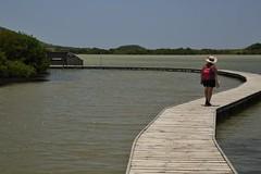 (fabhuleux) Tags: seule alone women femme 6d canon france antilles street people water beach martinique mangrove