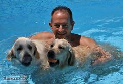 Manu con las niñas (Ubierno) Tags: perro chien dog madra الكلب 狗 σκύλοσ כלב 개 कुत्ता hond hund kutya köpek สุนัข cão собака ubierno alma golden retriever goldenretriever cachorro puppy bimba