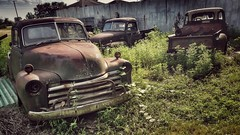 hangn' out in the 'hood....(HTT) (BillsExplorations) Tags: truck truckthursday htt rust oldtruck gm chevrolet vintage salvageyard restoration field cars