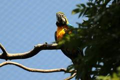 Papagei (mux68-uh) Tags: zoo tierpark hellabrunn tierparkhellabrunn münchen munich papagei vogel