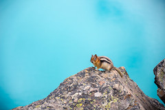 Squirrel Against Moraine Lake Backdrop (Sid's Corner) Tags: green canada canadianrockies rockies nature natureaddict nationalgeographic nationalgeographicworldwide ngc northamerica blue adventure schoksi schoksiphotography scenery nikond800 americas d800 flickraward flickrcentral flickrgallery flickrawardgallery picoftheday landscape landscapes lake lakes paradise travel tripofalifetime viewpoint nationalparks nationalpark naturephotography banff banffnationalpark wildanimal wildlifephotography wild squirrel squirrels