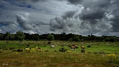 ...nubes y caballos.... (Garciamartín) Tags: paisaje nubes naturaleza rustico rural caballos granjademoreruela castillaleón españa europa nino garciamartín