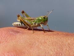 P1000807 (David Brockman) Tags: day6 frontierridge france spain cricket