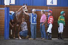 "2018-08-11 (39) r6 #3 Joyful Noise with Forest Boyce (JLeeFleenor) Tags: photos photography md maryland marylandracing laurelpark outside outdoors jockey جُوكِي ""赛马骑师"" jinete ""競馬騎手"" dżokej jocheu คนขี่ม้าแข่ง jóquei žokej kilparatsastaja rennreiter fantino ""경마 기수"" жокей jokey người horses thoroughbreds equine equestrian cheval cavalo cavallo cavall caballo pferd paard perd hevonen hest hestur cal kon konj beygir capall ceffyl cuddy yarraman faras alogo soos kuda uma pfeerd koin حصان кон 马 häst άλογο סוס घोड़ा 馬 koń лошадь"
