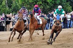 (Enllasez - Enric LLaó) Tags: cavalls caballos cavall caballo vilaseca torredendolça 2014 carrera
