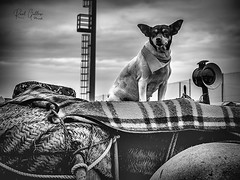 A veces viene bien ver la vida desde otro punto de vista... (Raúl Gallego Huete) Tags: zuiko45mm18 olympusomdm5markii perro dog blackandwhite byn bnw bnwportrait street streetphotography trestombsbisbal